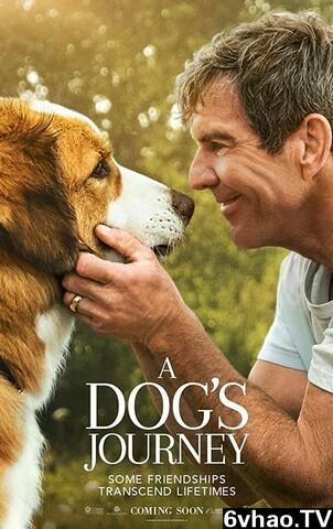 一条狗的使命2高清在线观看